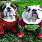 Best Ugly Christmas Sweater for Dogs