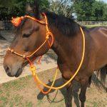 Best Rope Halter