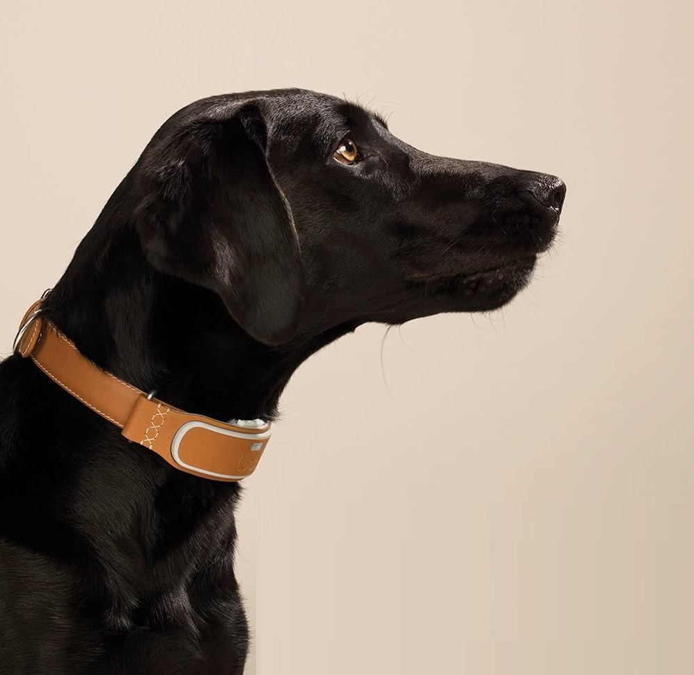 Link Akc Smart Gps Tracker Dog Collar Review