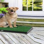 Best Outdoor Dog Toilet (Potty)